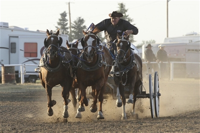 Southern Alberta Professional Chuckwagon & Chariot Championships  5:30 PM Nightly